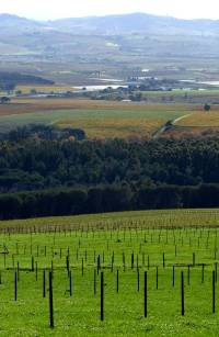 Spier Vineyard Shot